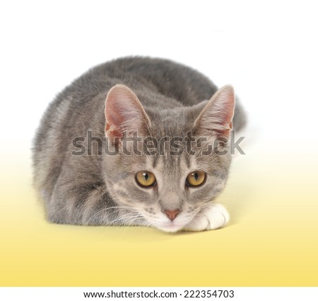 A little kitten is looking into the distance on a white isolated background with yellow at the bottom for a pet concept. - stock photo
