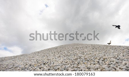 A little squirrel running for his life, on top of a huge gravel pile, with a big raven  in hot pursuit. - stock photo