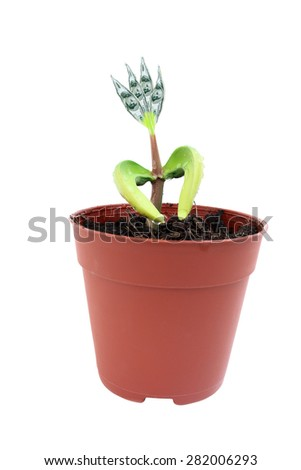 a little tree in pot on white background. - stock photo
