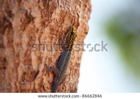 A lizard climbing up the trunk of a tree - stock photo