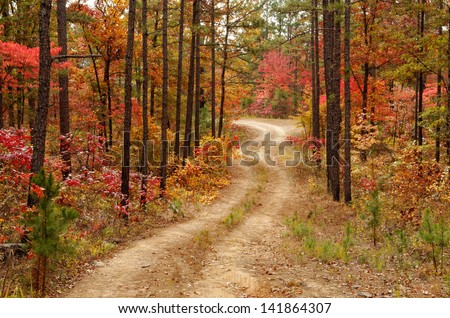 A logging road in the Ouachita National Forest - stock photo