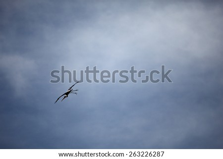 A lone crane bird flying across a blue cloudy sky.  - stock photo