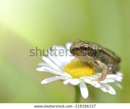 A lone frog sitting on a flower. - stock photo
