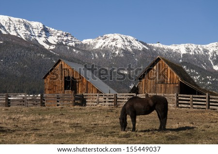 A lone horse grazes near barn in early morning on the ranch mountain background - stock photo