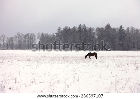 A lone horse on a snowy field - stock photo