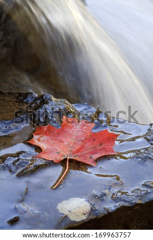 A lone Maple Leaf sits on the edge of Ocqueoc Falls during the autumn season Michigan. Onaway, Michigan, USA. - stock photo
