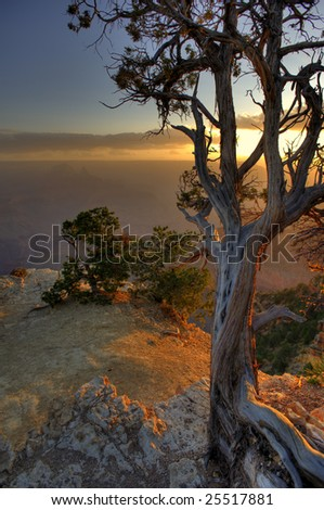 A lone pine tree clings to life on the canyon edge. - stock photo