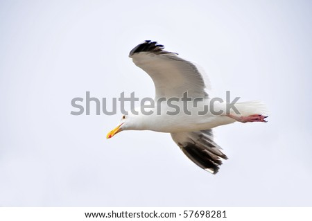 A lone seagull in flight over the Pacific Ocean - stock photo