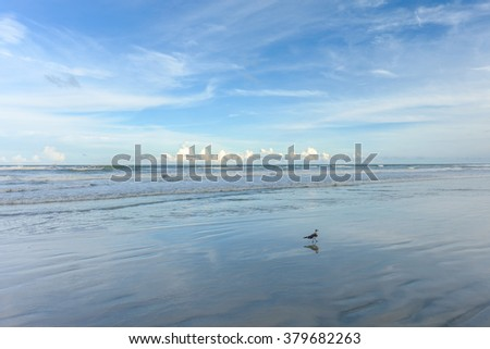 A lone seagull walks the Florida Shoreline looking for dinner - stock photo