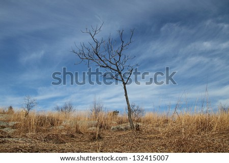 A lone tree against a blue sky with wispy clouds on Kittatinny Ridge in Stokes State Forest, New Jersey - stock photo