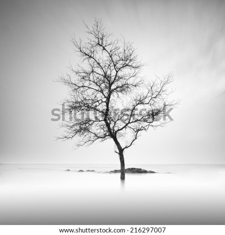 A lone tree partially submerged in the water . Long Exposure black and white.  - stock photo