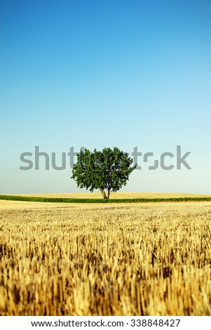 A lone tree stands alone in a field surrounded by wheat stubble and a blue sky on a farm. - stock photo