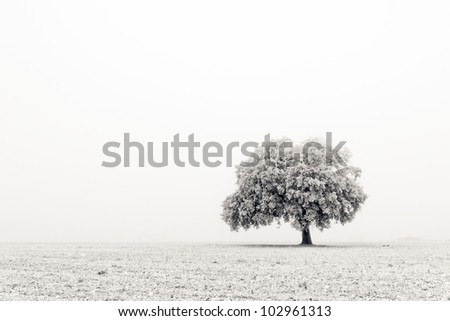 A lonely and cold tree during the winter - stock photo