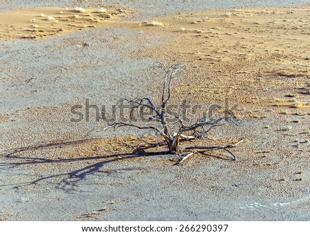 A lonely dead tree at the foot of the Dune 45 in Sossusvlei plato of Namib Naukluft National Park - Namibia, South Africa - stock photo