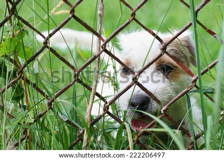 A lonely sad dog behind wire fence - stock photo