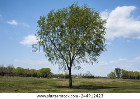 A lonely tree in outside - stock photo