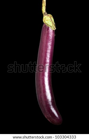 A long eggplant against a black background - stock photo