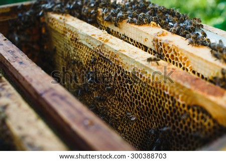 A lot of bees on beehive with differed kinds of wooden frames of honeycomb inside, close up - stock photo