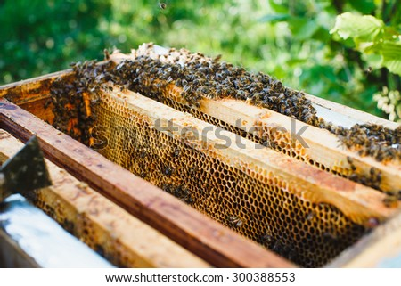 A lot of bees on beehive with wooden frames of honeycomb inside, in the yard on sunny day, close up - stock photo