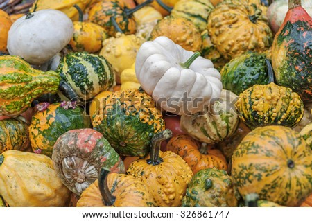 A lot of different colorful autumnal pumpkins in full basket - stock photo