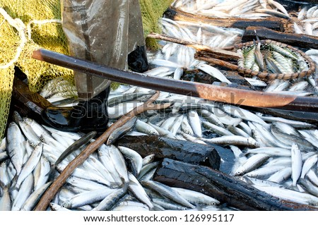 a lot of fish (just caught) in a boat - stock photo
