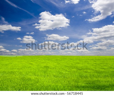 a lot of green wheat under blue sky - stock photo