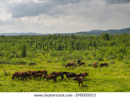a lot of horses grazing in the field, Mare and foal, mother and child, sunlight, field, freedom, clouds, freedom, horse, wild, without supervision, will - stock photo