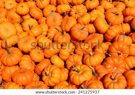 a lot of mini pumpkin at outdoor farmers market - stock photo