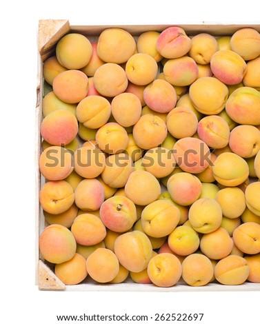 a lot of ripe apricots - stock photo