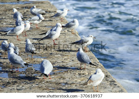 a lot of seagulls stand on the pier and bask in the sun - stock photo