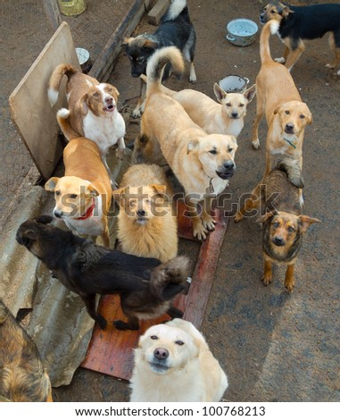 A lot of stray dogs in the shelter - stock photo