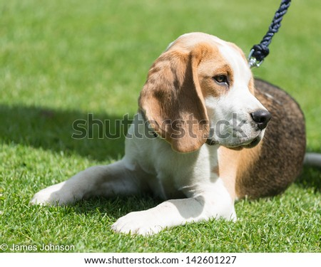 A lovely puppy laid in short grass enjoying the sun - stock photo