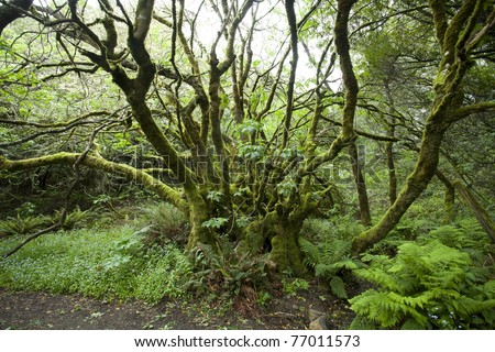 A Lush Moss Tree at Muir Woods - stock photo