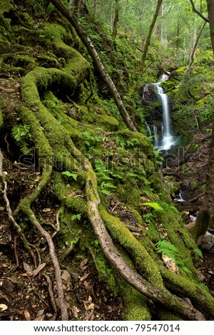 A lush rain forest waterfall with large roots and ferns - stock photo
