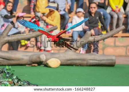 A Macaw Flying as a performance  - stock photo