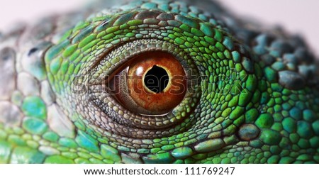 a macro of a fantastic green iguana eye - stock photo