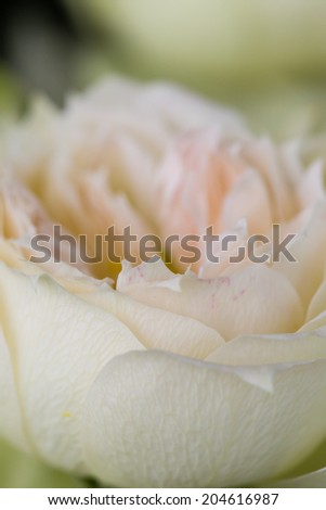 A macro shot of a beautiful white bloom - stock photo
