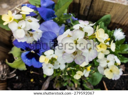A macro shot of a collection of springtime flowers. - stock photo