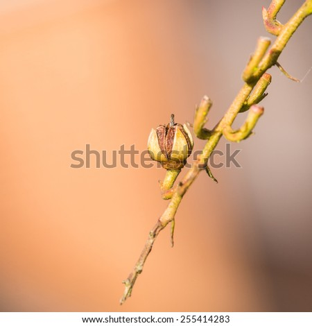 A macro shot of a forest flame bush seed head. - stock photo