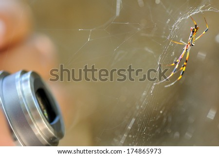 a macro shot of a photographer taking a spider picture in macro mode - stock photo