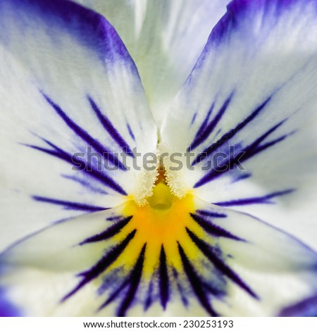 A macro shot of a pretty little viola bloom. - stock photo