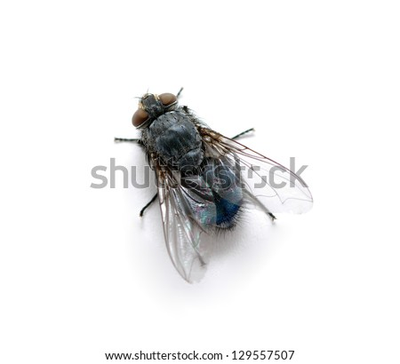A macro shot of  fly on a white background - stock photo