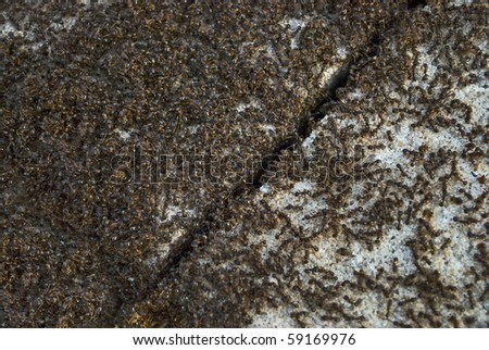 A macro view of a large number of ants on a sidewalk. - stock photo