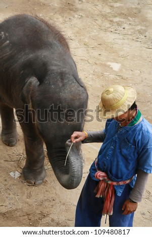 a mahout play with elephant, Chiang Mai, Thailand - stock photo