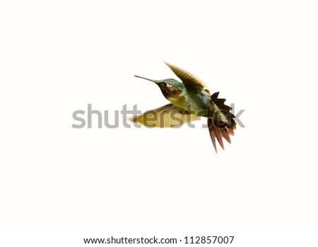 A male ruby throated hummingbird (archilochus colubris) in motion, isolated on white. - stock photo