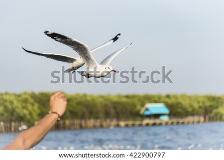A Man feeding Seagull while flying over The Blue Sky with Clouds and Green Nature Landscape Background. - stock photo