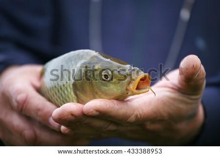 A man holding a small carp - stock photo