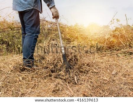 a man rake shoveling dry grass - stock photo