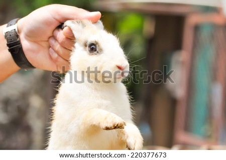 a man's holding a rabbit - stock photo