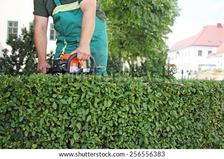 A man trimming hedge in city park - stock photo